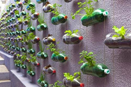 Solusi Cerdas Botol Plastik Bekas Bisa Memiliki Nilai Jual Tinggi