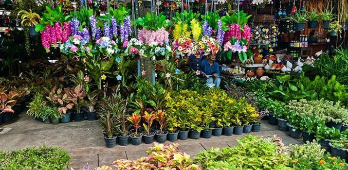 Peluang Usaha Tanaman Hias Portal Bisnis Riau Indonesia Berita