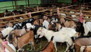 Orang Wonosobo Buka Lapak Jual hewan Qurban di Ibu Kota e1533619314564 300x173 - Panen Rezeki saat Idul Adha, Ini 5 Peluang Usaha yang Bisa Dicoba