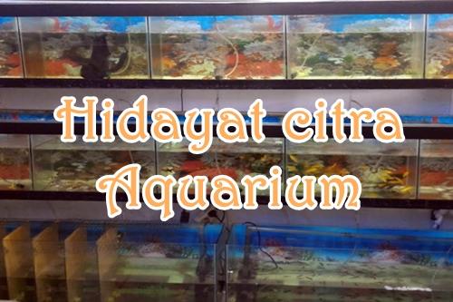 Hidayat citra Aquarium Pekanbaru 1 - Hidayat Citra Aquarium Pekanbaru