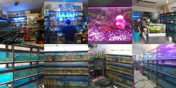 Hidayat citra Aquarium Pekanbaru 2 - Hidayat Citra Aquarium Pekanbaru