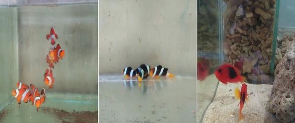 Dimas Aquatic Pekanbaru 2 - Dimas Aquatic Pekanbaru
