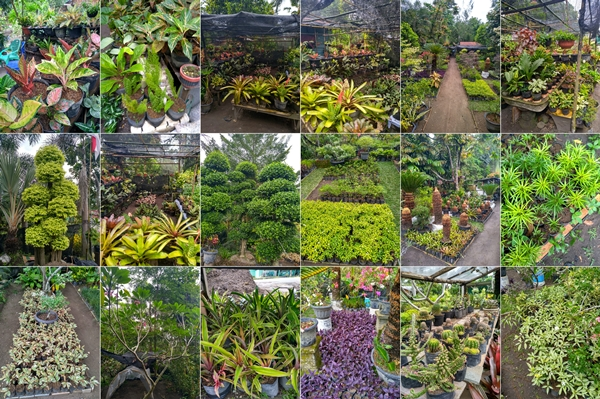 Family Asri 2 - Taman Bunga Pekanbaru