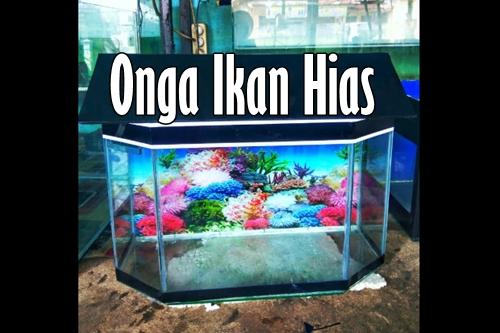 Onga Ikan Hias 1 - Onga Ikan Hias - Toko Aquarium Murah Pekanbaru