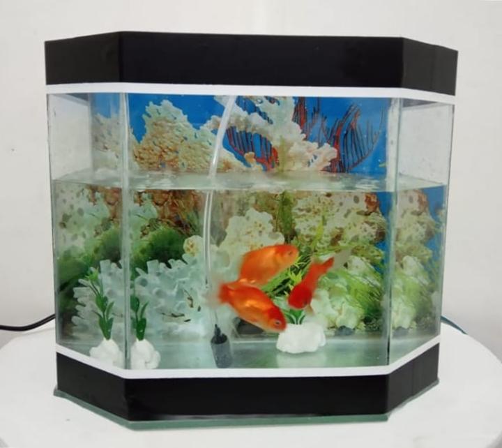 Onga Ikan Hias 5 - Onga Ikan Hias - Toko Aquarium Murah Pekanbaru