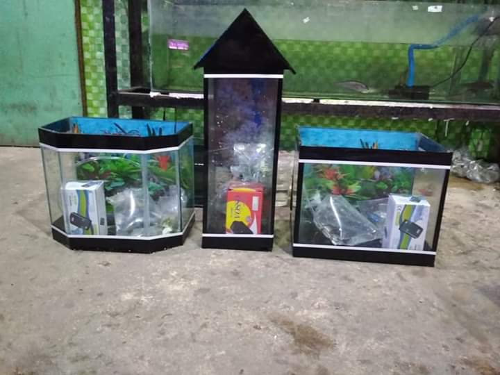 Onga Ikan Hias 6 - Onga Ikan Hias - Toko Aquarium Murah Pekanbaru