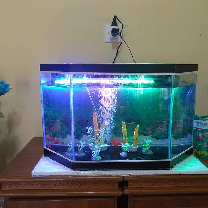 Onga Ikan Hias 7 - Onga Ikan Hias - Toko Aquarium Murah Pekanbaru