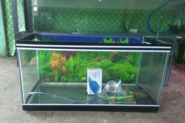 Onga Ikan Hias 8 - Onga Ikan Hias - Toko Aquarium Murah Pekanbaru