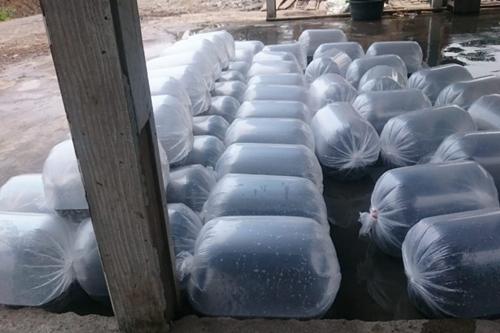 Jual Bibit Ikan Air Tawar Murah Pekanbaru - Jual Bibit Ikan Air Tawar Murah Pekanbaru