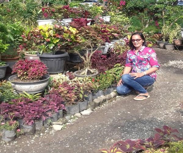 tm - Taman Bunga Dear Krisanti